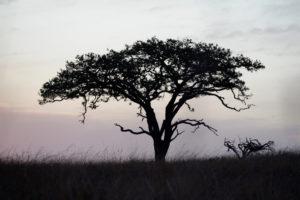 « Peut-on voir un arbre et ne pas être heureux ? »